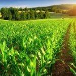 جدیدترین کتاب های کشاورزی
